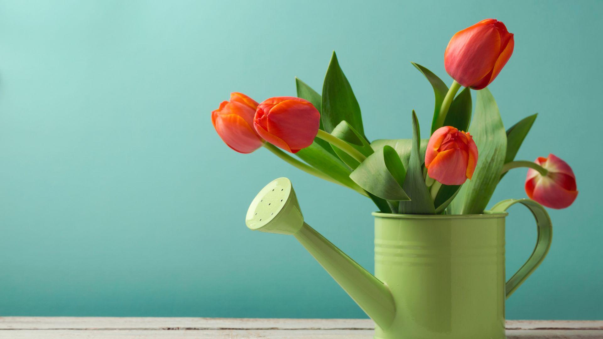 Iphone 6 Orange Flower Wallpaper Desktop Wallpaper Orange Tulips Plants Flower Pot Hd