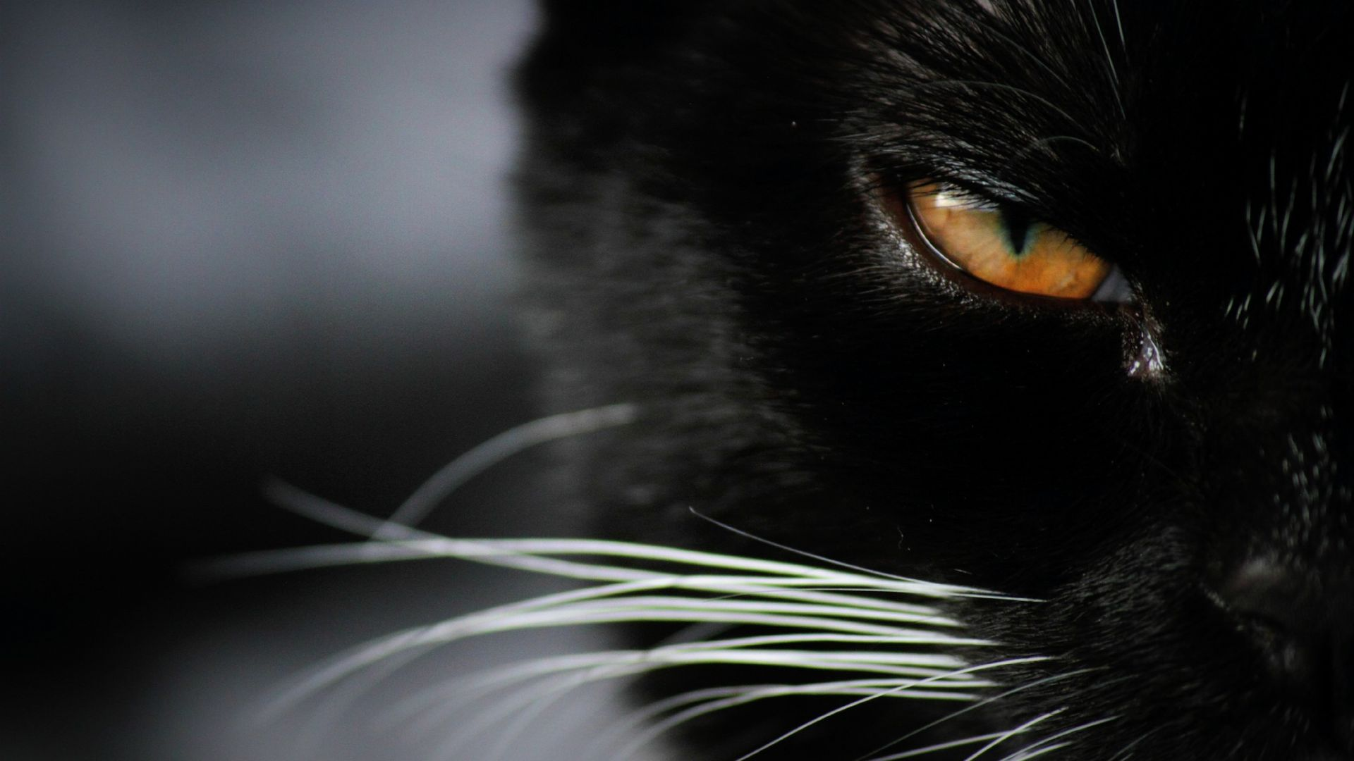 Hd Fantasy Girl Wallpapers 1080p Desktop Wallpaper Angry Black Cat Eye Close Up Hd Image