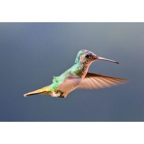 Medium Crop Of Do Hummingbirds Sleep
