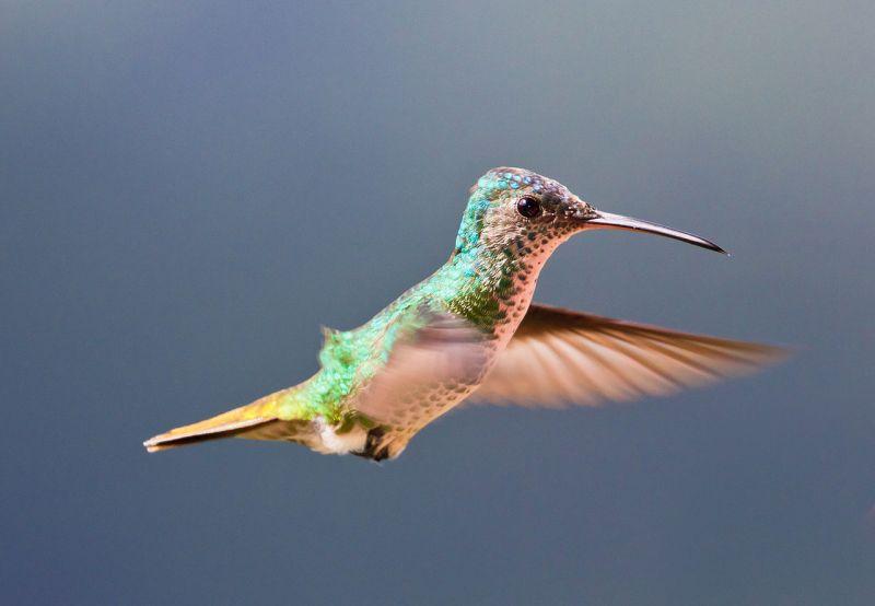 Large Of Do Hummingbirds Sleep