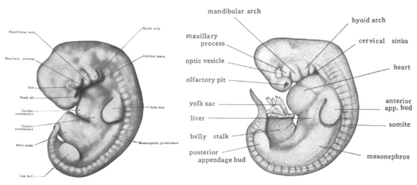 diagram of egg