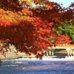 京都の朝を満喫したいお寺や神社を観光・拝観できる特別な日にしましょう!