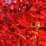 京都紅葉おすすめスポット人気の魅力あふれる名所とライトアップで古刹を巡る❣