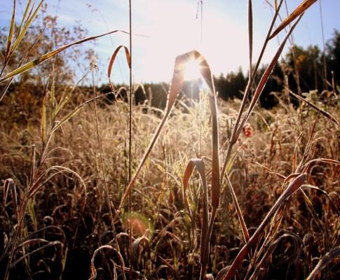 Herbst-Fotowettbewerb: Die Gewinner!