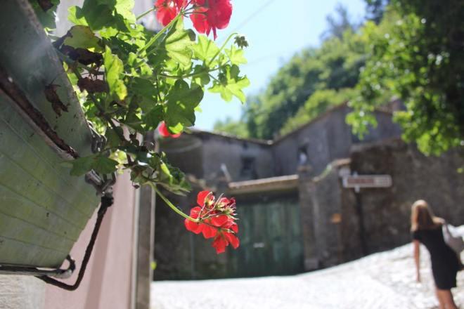 Sintra Blumen
