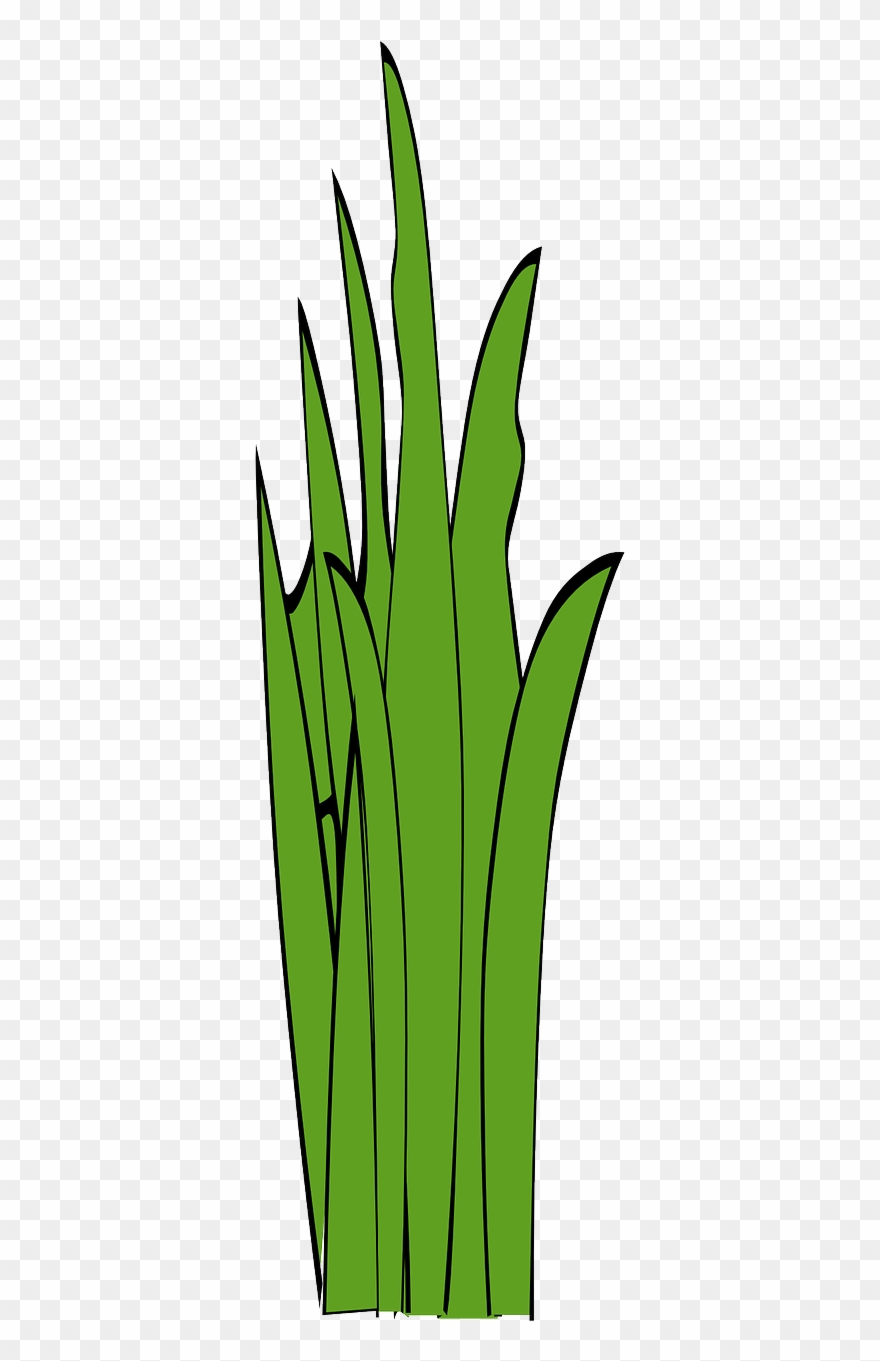 Unkraut Clipart Blades Of Grass Grass Weed Png Image Clipart 2556558 Pinclipart