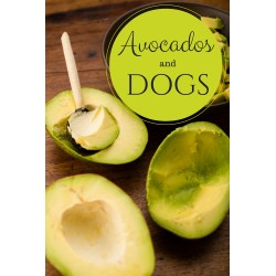 Small Crop Of Avocado And Dogs