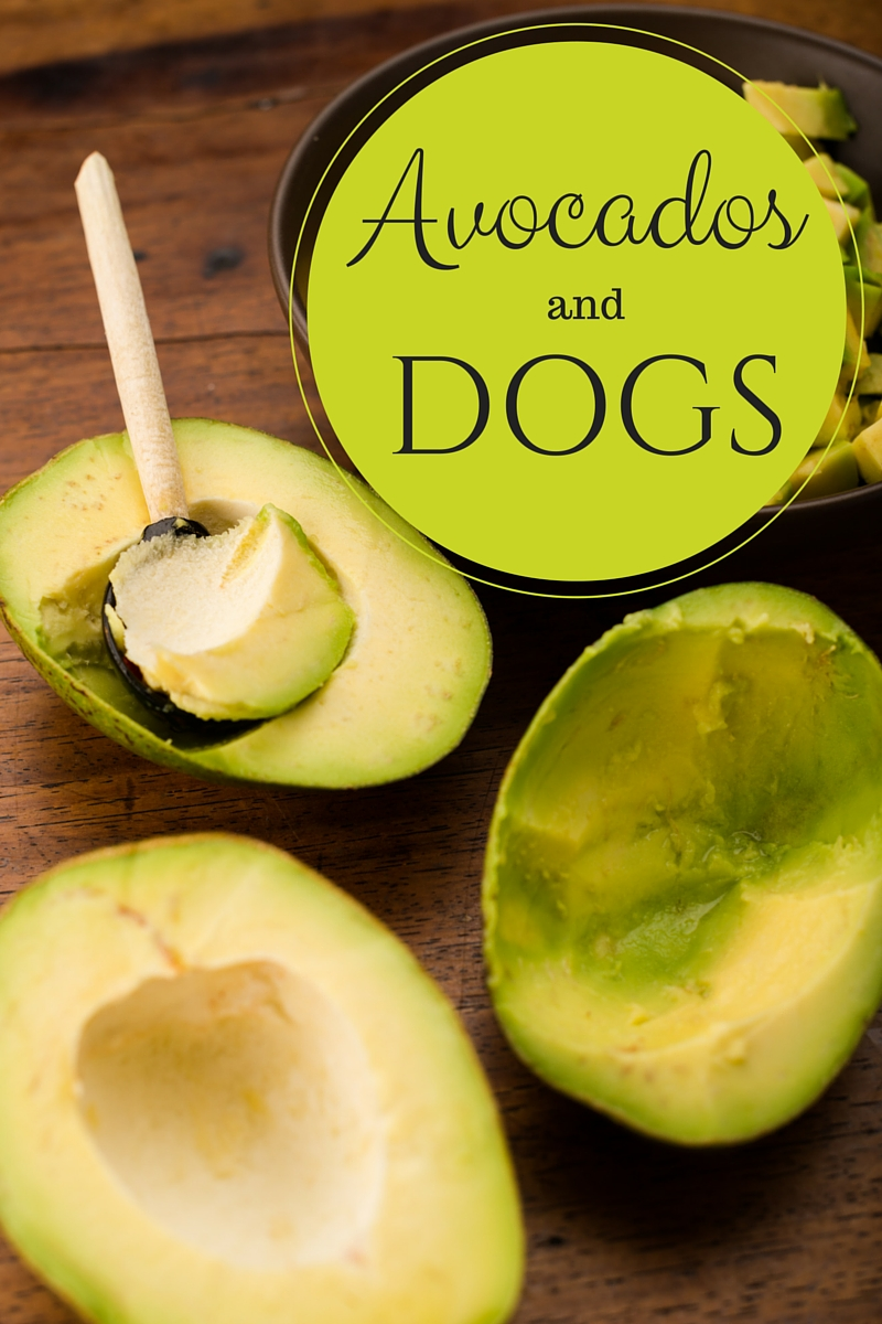 Large Of Avocado And Dogs