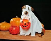 Dog Halloween Costume Ideas 2016 - Pink Lover