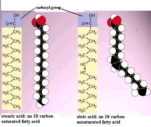Lipids Structure, Function and Examples