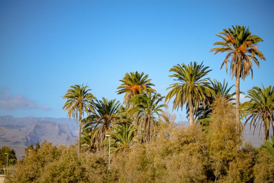Cran Canaria-66
