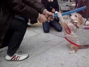 白刃取り 犬