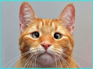 画像引用元:http://1.bp.blogspot.com/-Rkme9Em2fYA/U94hKIhP_hI/AAAAAAAACjM/bjx9gi41VOM/s1600/cat+(1).jpg