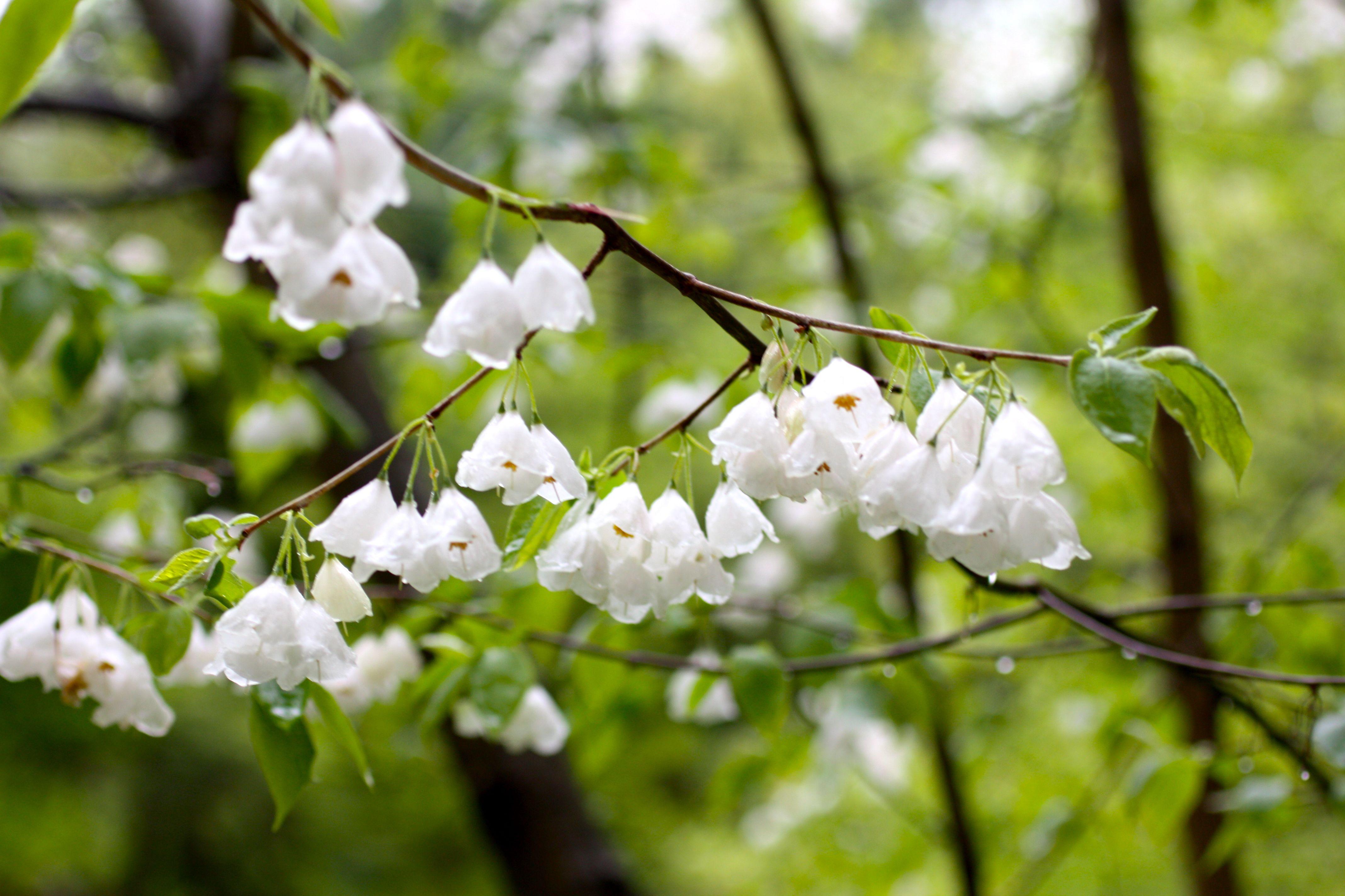A Flowering Tree Wish List