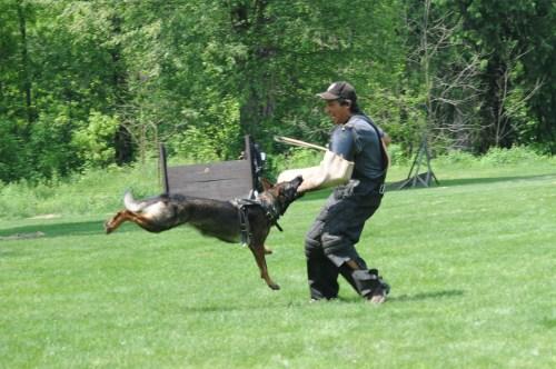 Medium Of How To Train A German Shepherd Puppy