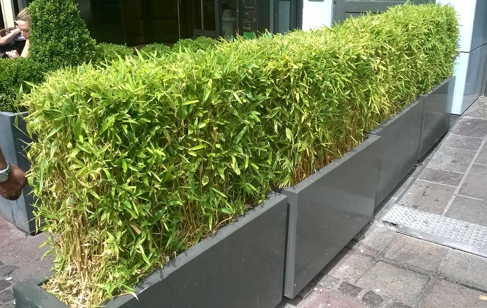 bac a fleur pour bambou | jardiniere en bois jardiniare alacgant