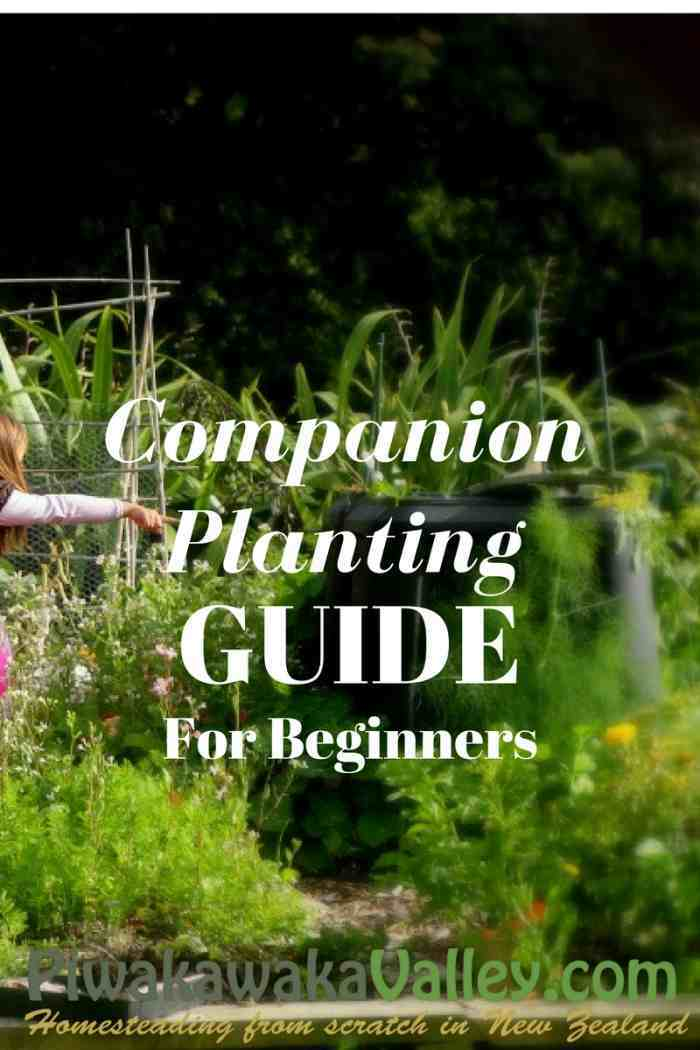 Companion Planting Chart for Vegetables and Herbs Growing Vegetables
