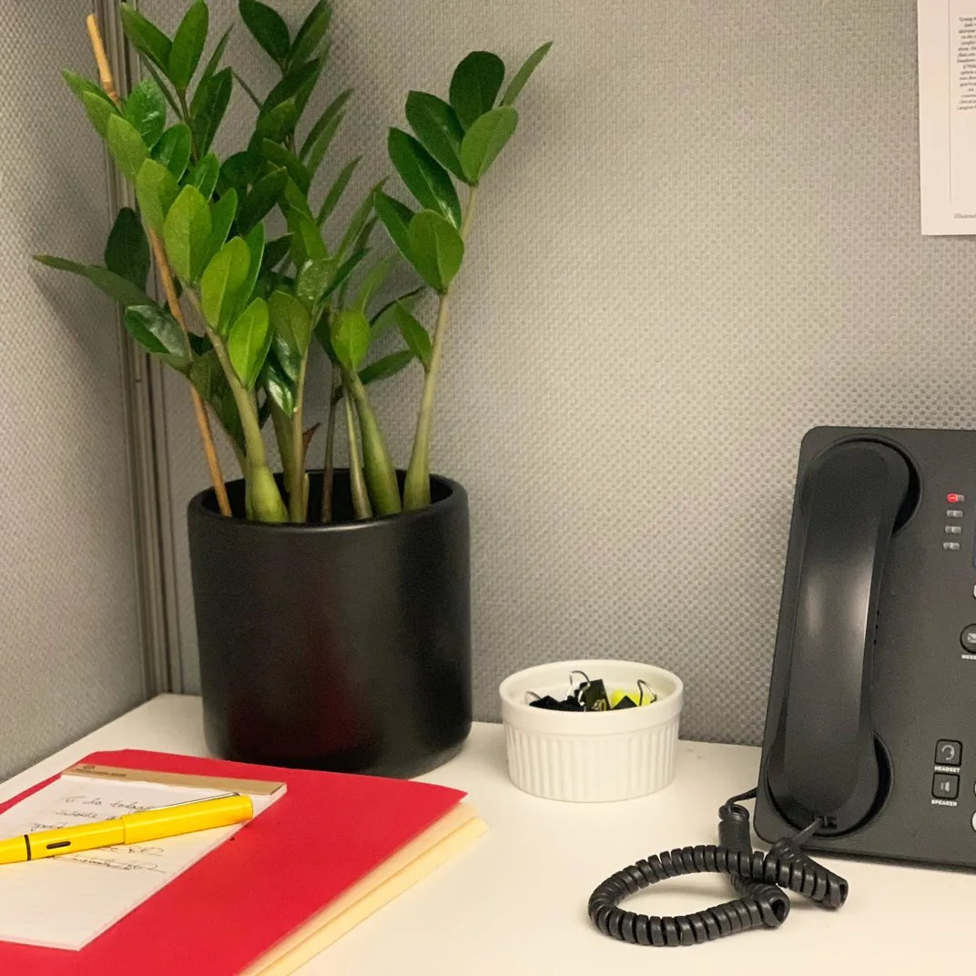Cubicle Wall Planter The 6 Best Plants For Cubicles According To Plant Experts