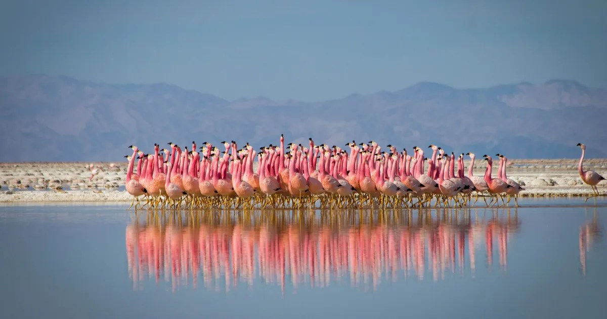 Animal Print Pink Wallpaper Planet Earth Ii Recap The One With The Mountains