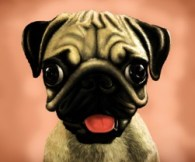 Cute Candy Pug Dog