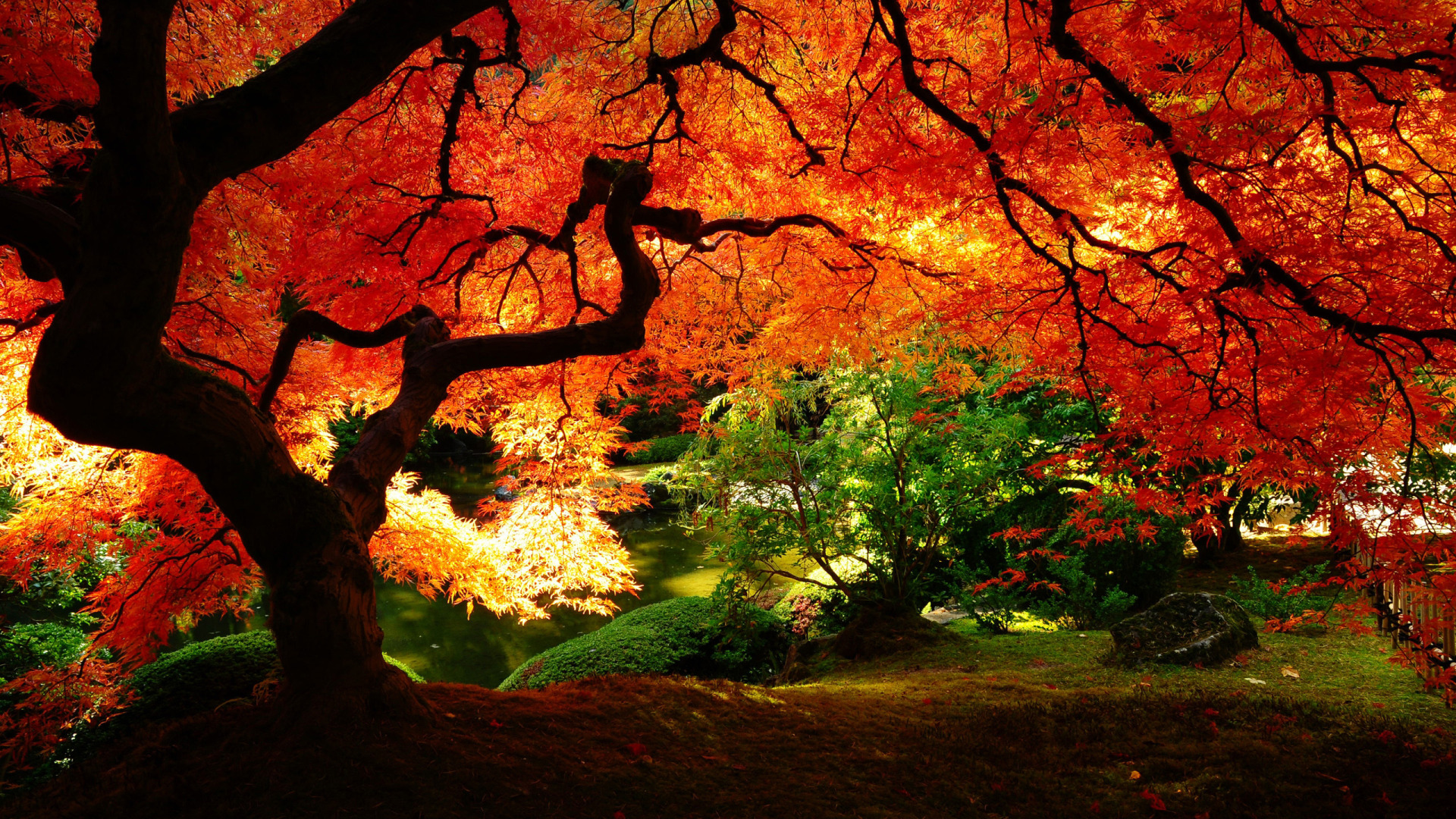 Scenary Wallpaper 82 Fall Scenery Wallpapers Wallpaper Cave 64 Fall Scenery