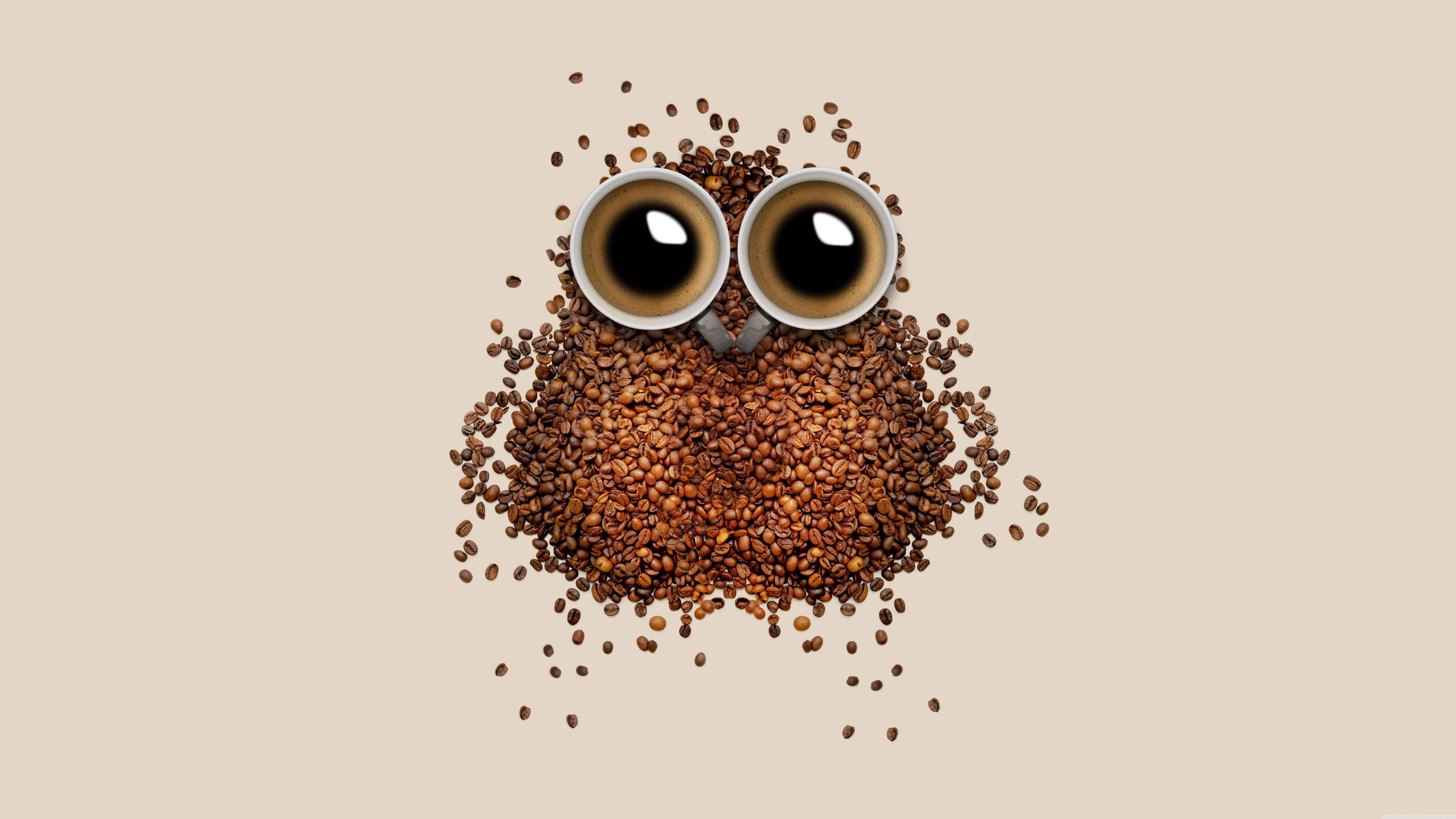 Ultra Hd Desktop Wallpapers Coffee Bean Owl Uhd 8k Wallpaper Pixelz