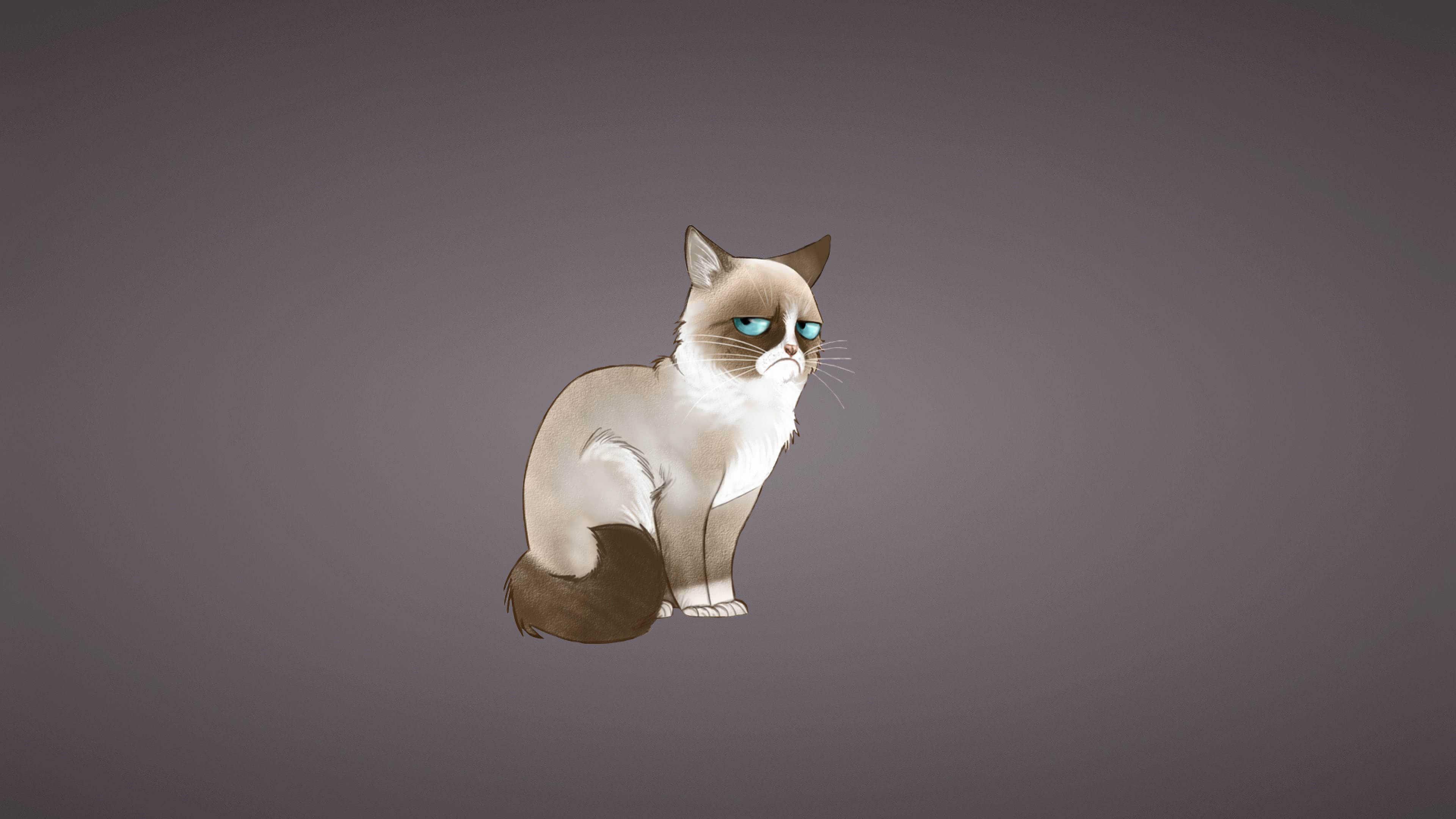 Destop Wallpaper Cars Grumpy Cat Meme Uhd 4k Wallpaper Pixelz