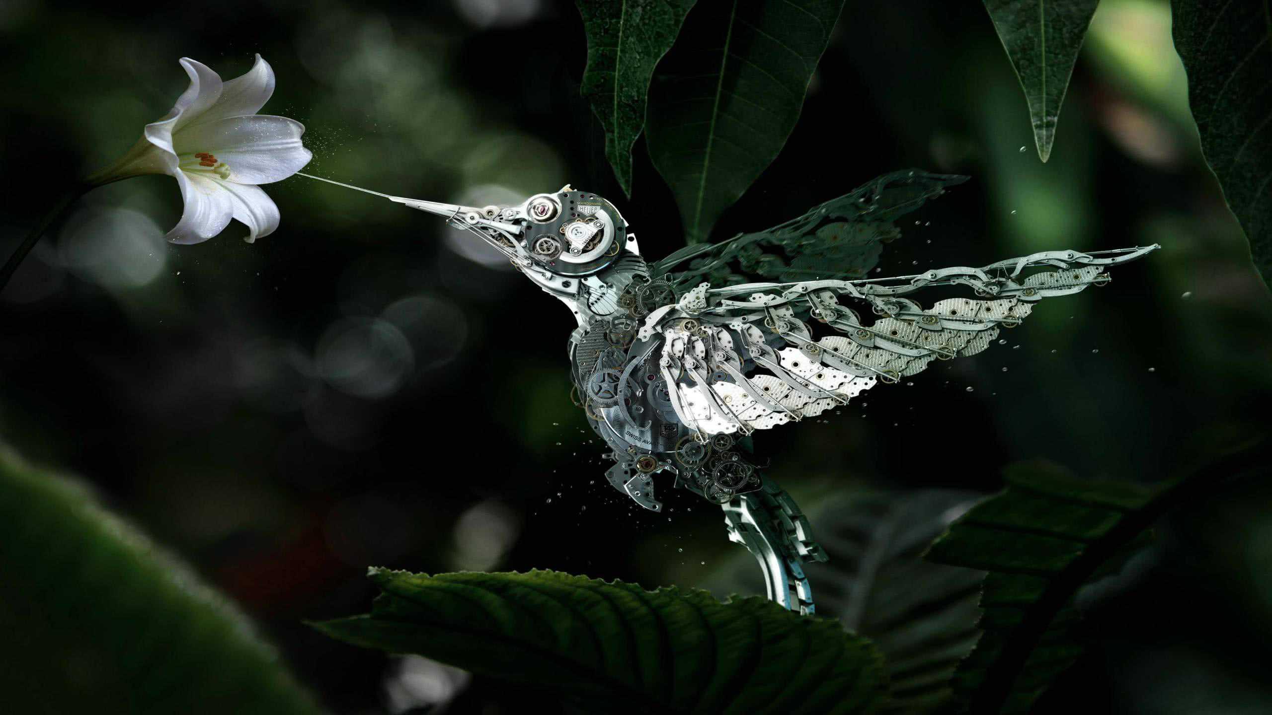 Download Cars Wallpapers For Mobile Mechanical Hummingbird Wqhd 1440p Wallpaper Pixelz