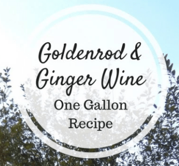 Goldenrod and Ginger Wine – One Gallon Recipe