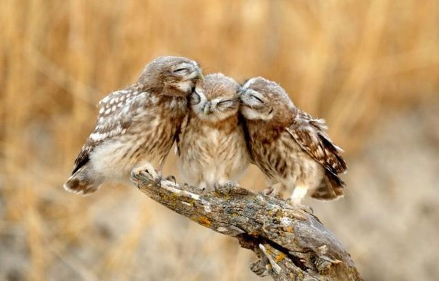 Cute Baby Flying Kiss Wallpaper Animal Planet Part 210 Animals