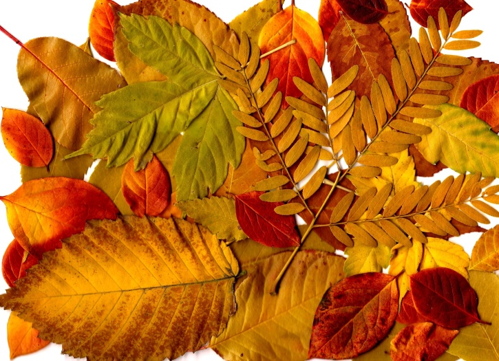 Fall Background Wallpaper Imagen Gratis Oto 241 O Hojas Collage