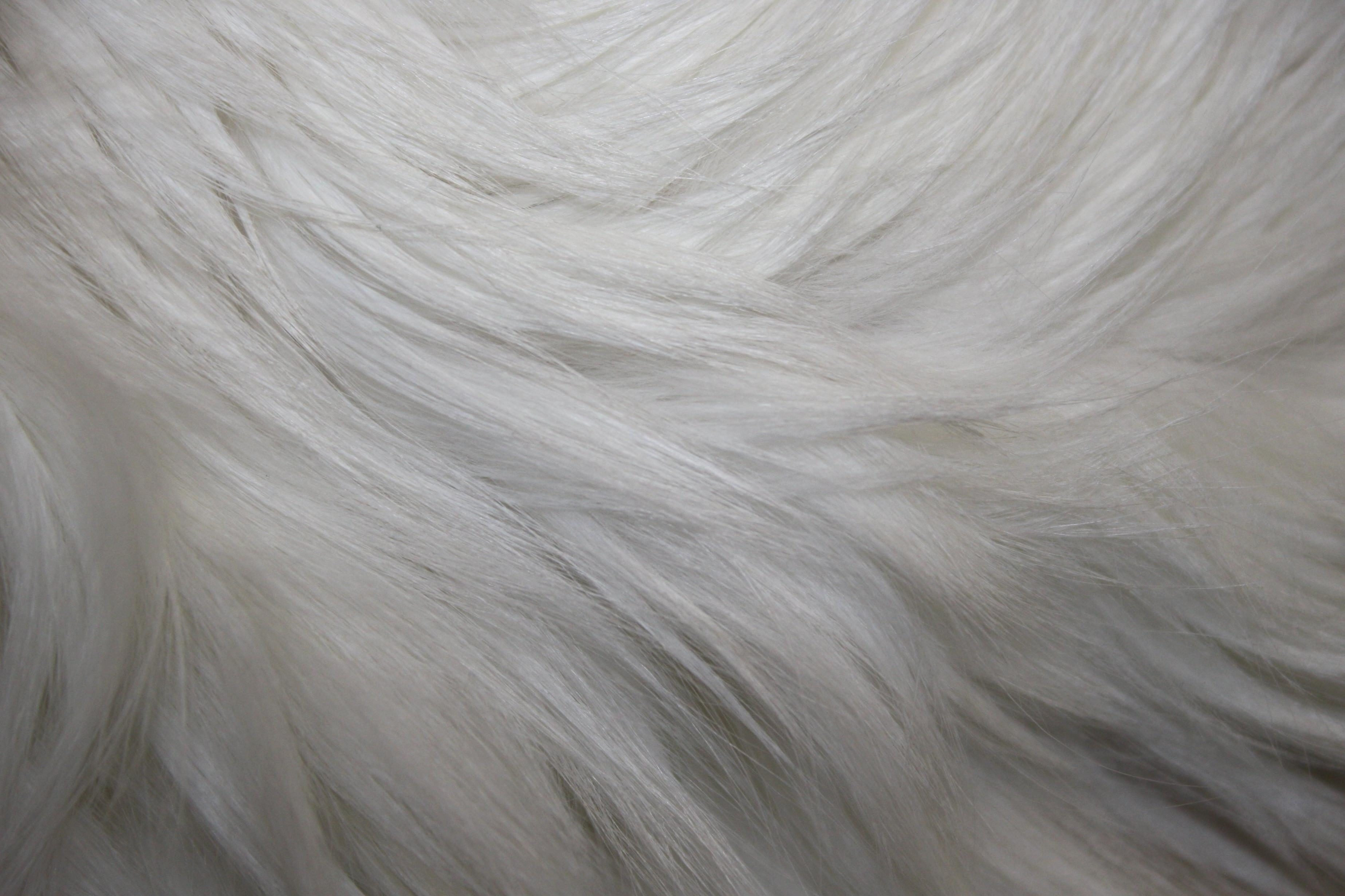 Black Cat Wallpaper Free Picture White Fur Texture