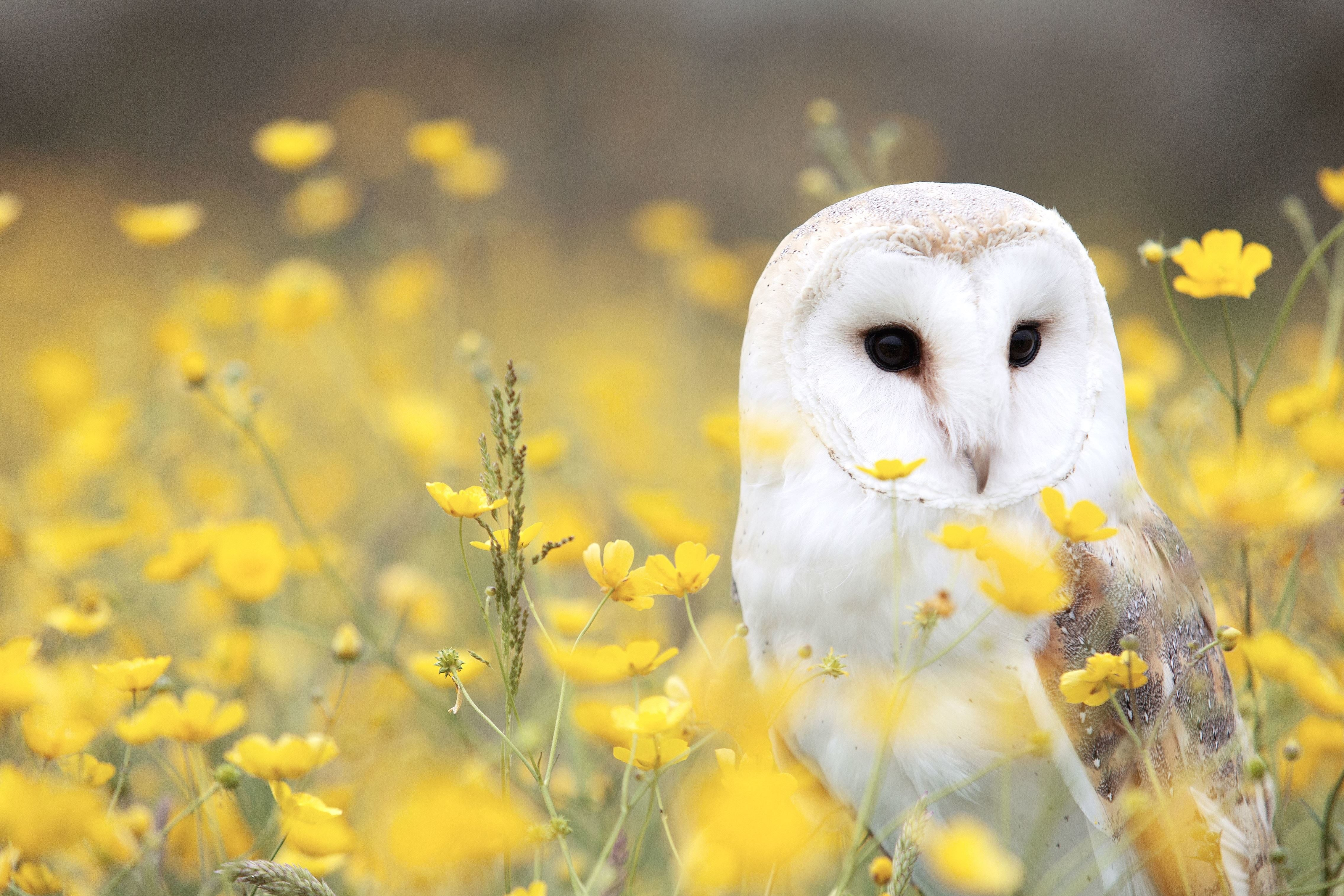 Animal Wallpaper Hd Free Picture Flowers Grass Vertebrate Owl Animal