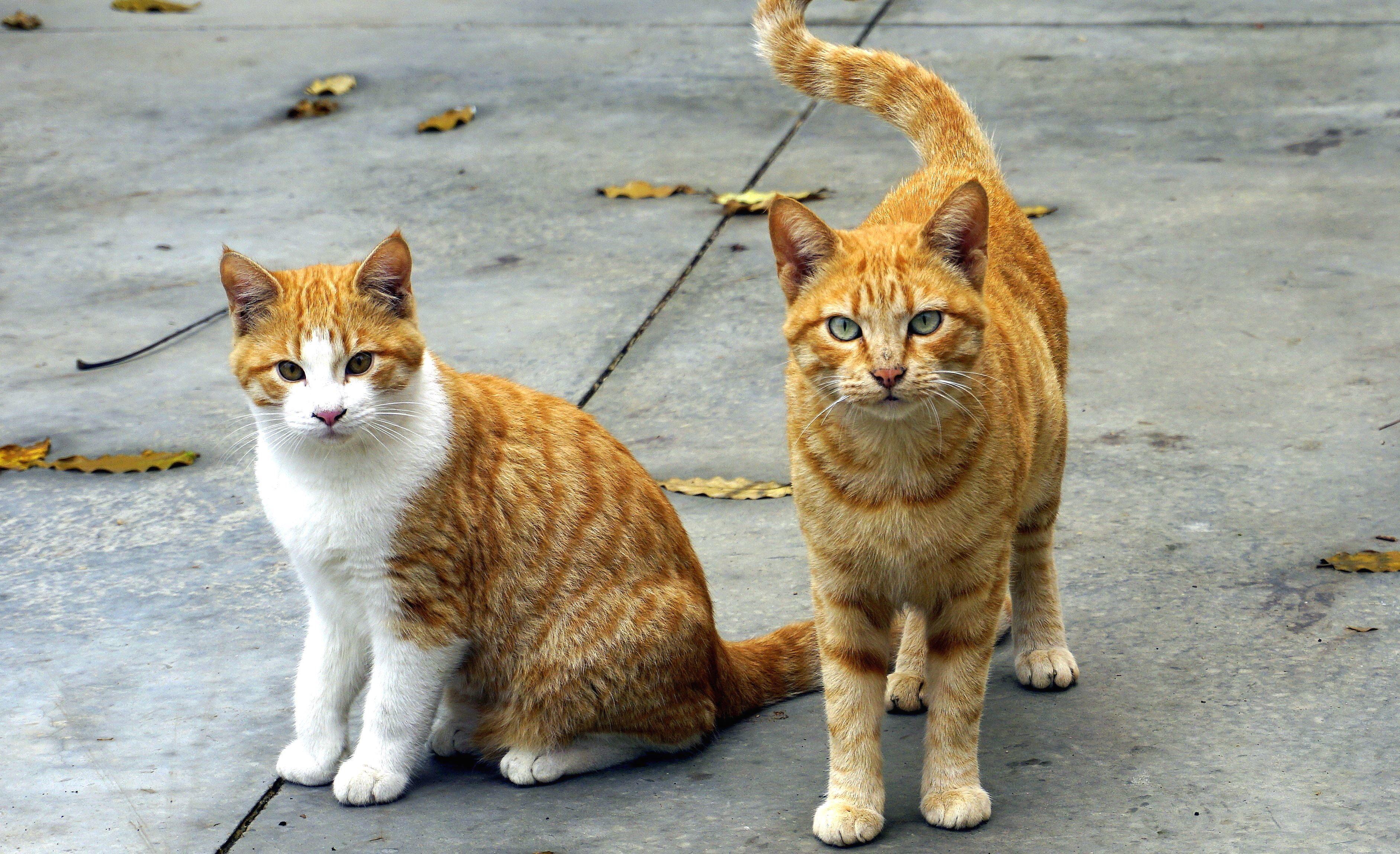 Download Wallpaper Cute Cat Free Picture Cats Domestic Cat Animals Kitten Feline