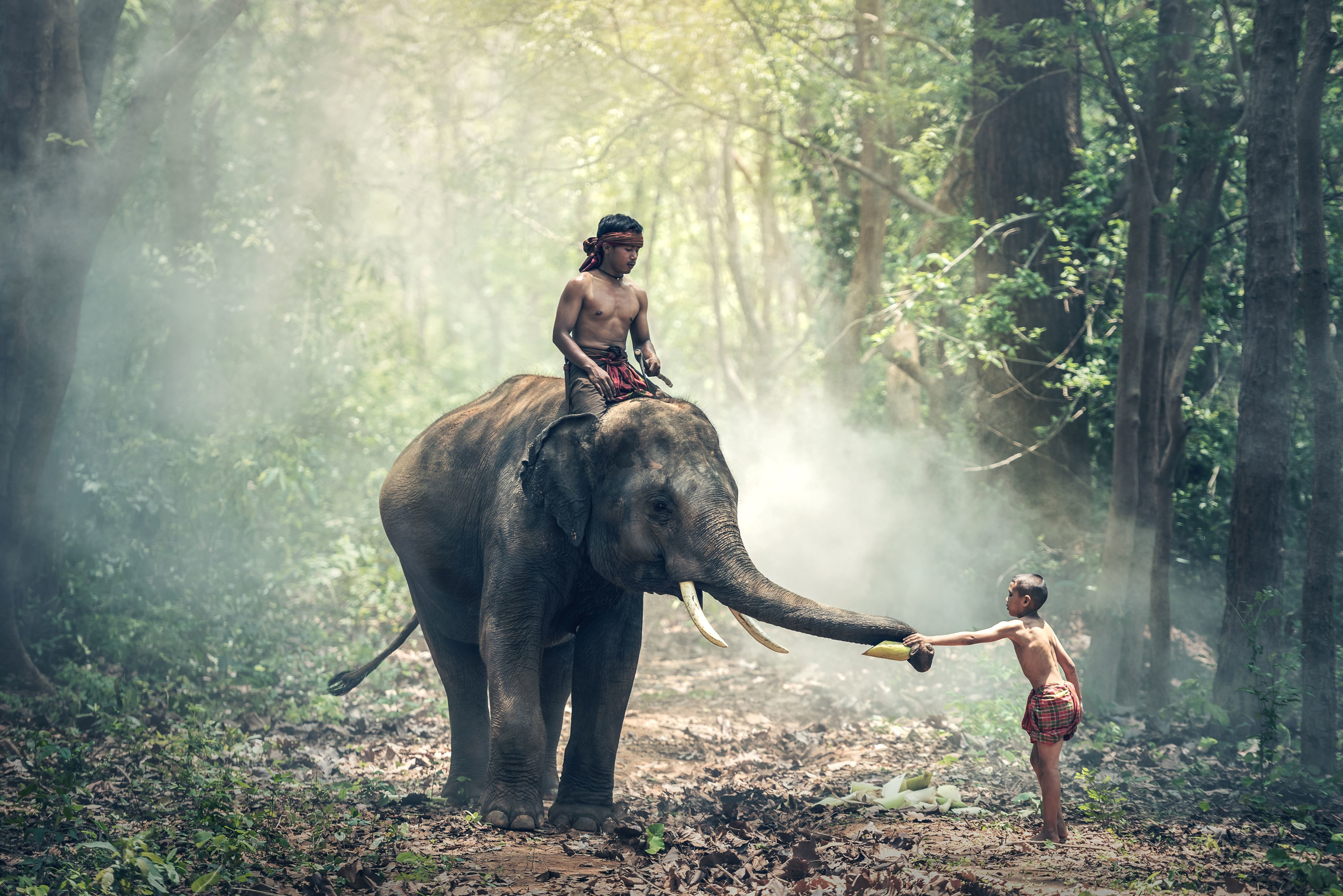 Girl Couple Wallpaper Free Picture Elephant People Forest Sunlight Travel Tree