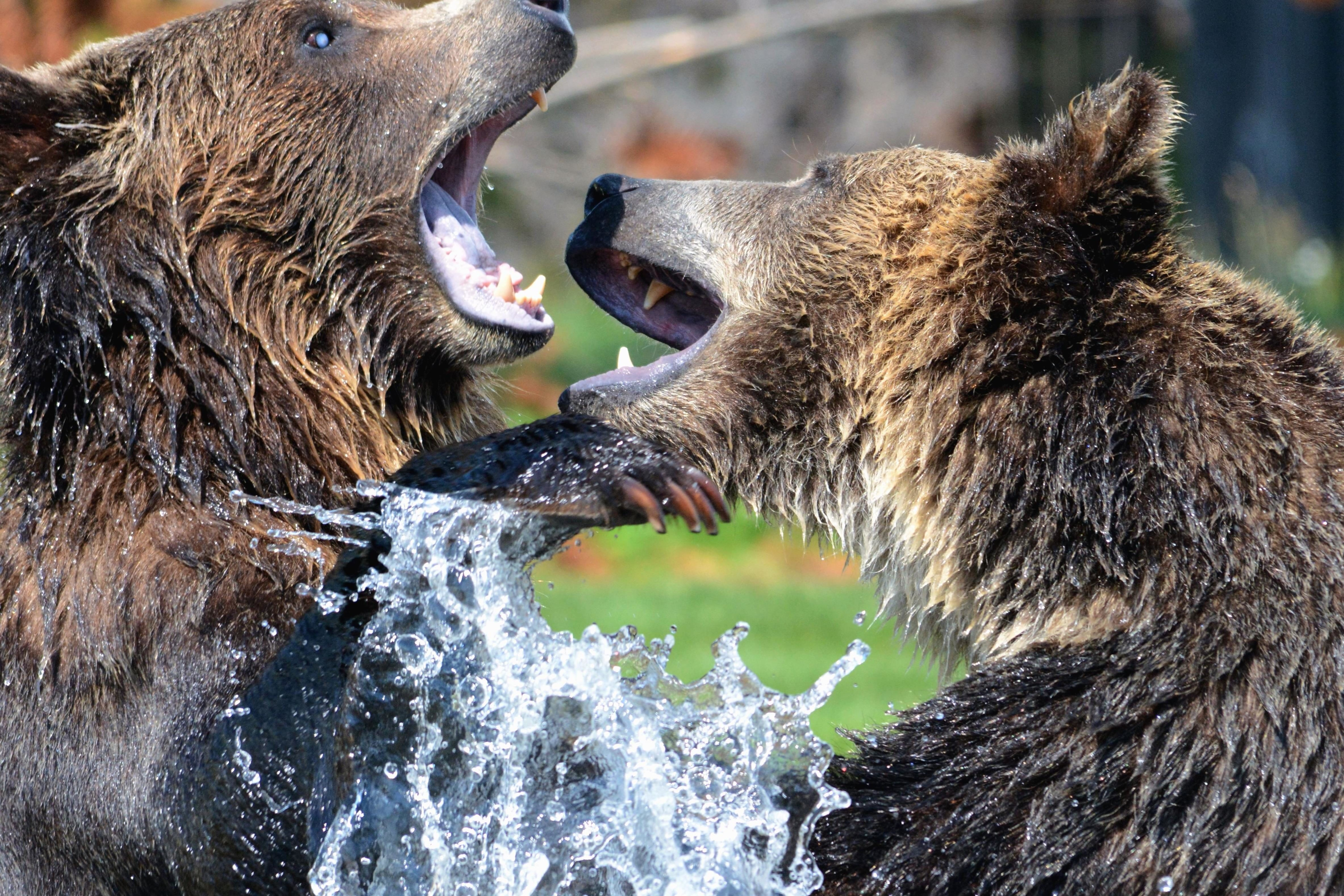 Cute Camera Wallpaper Free Picture Bears Water Wild Animals