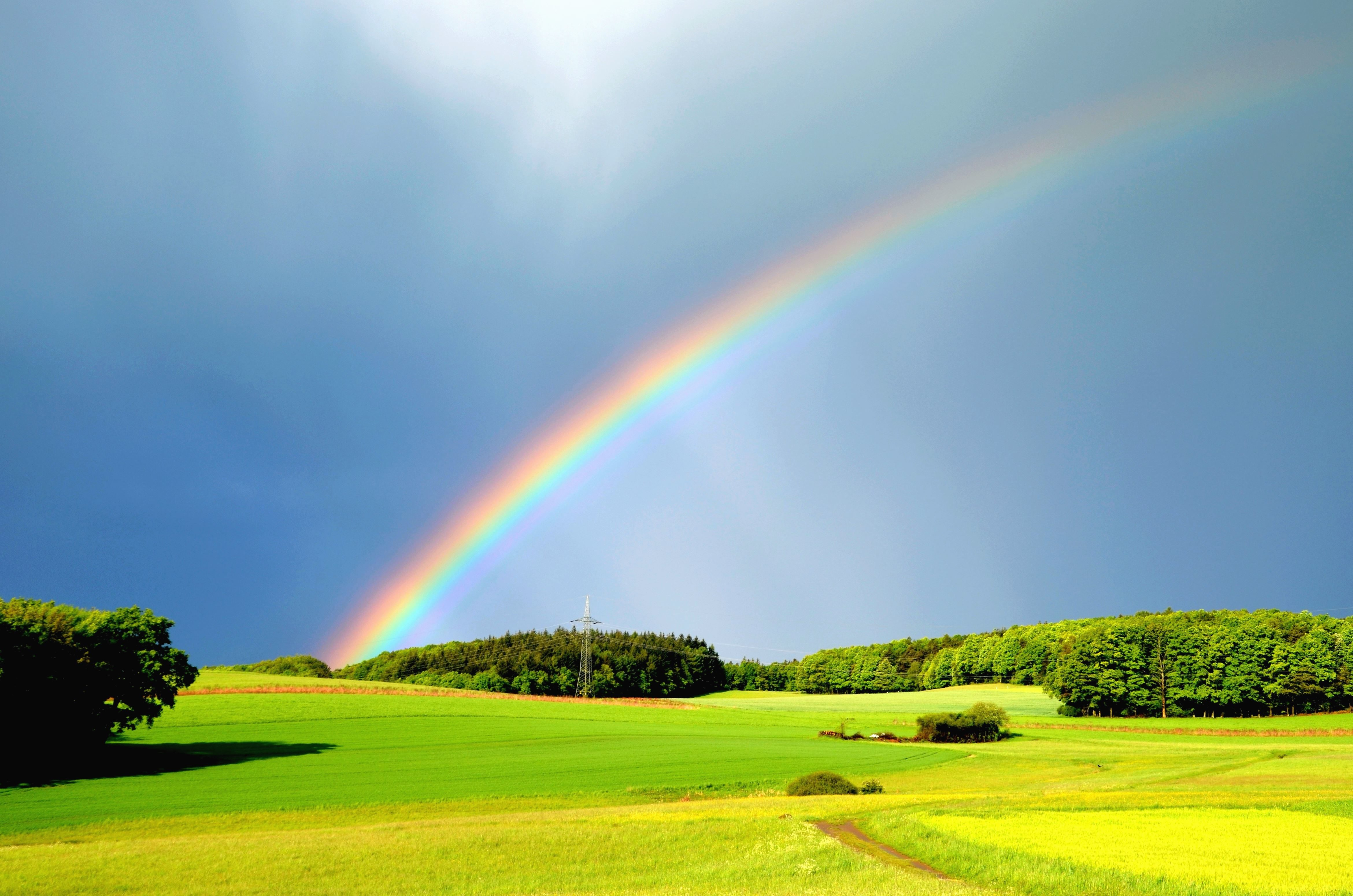 Wallpaper Full Color Hd Free Picture Rain Rainbow Meadow Forest Colorfull
