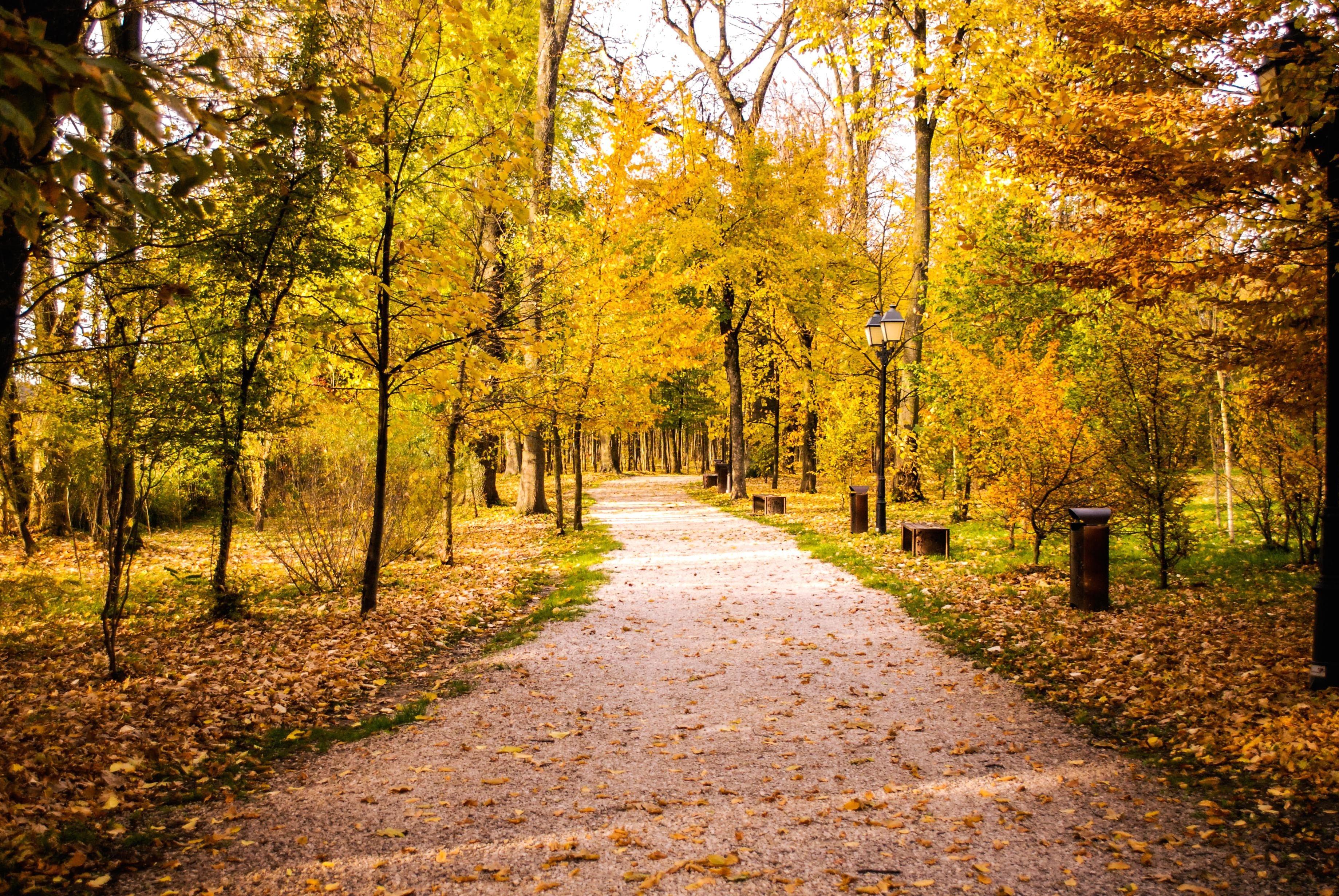 3d Wallpaper New York City Image Libre Feuille Route Bois Arbre Paysage Parc