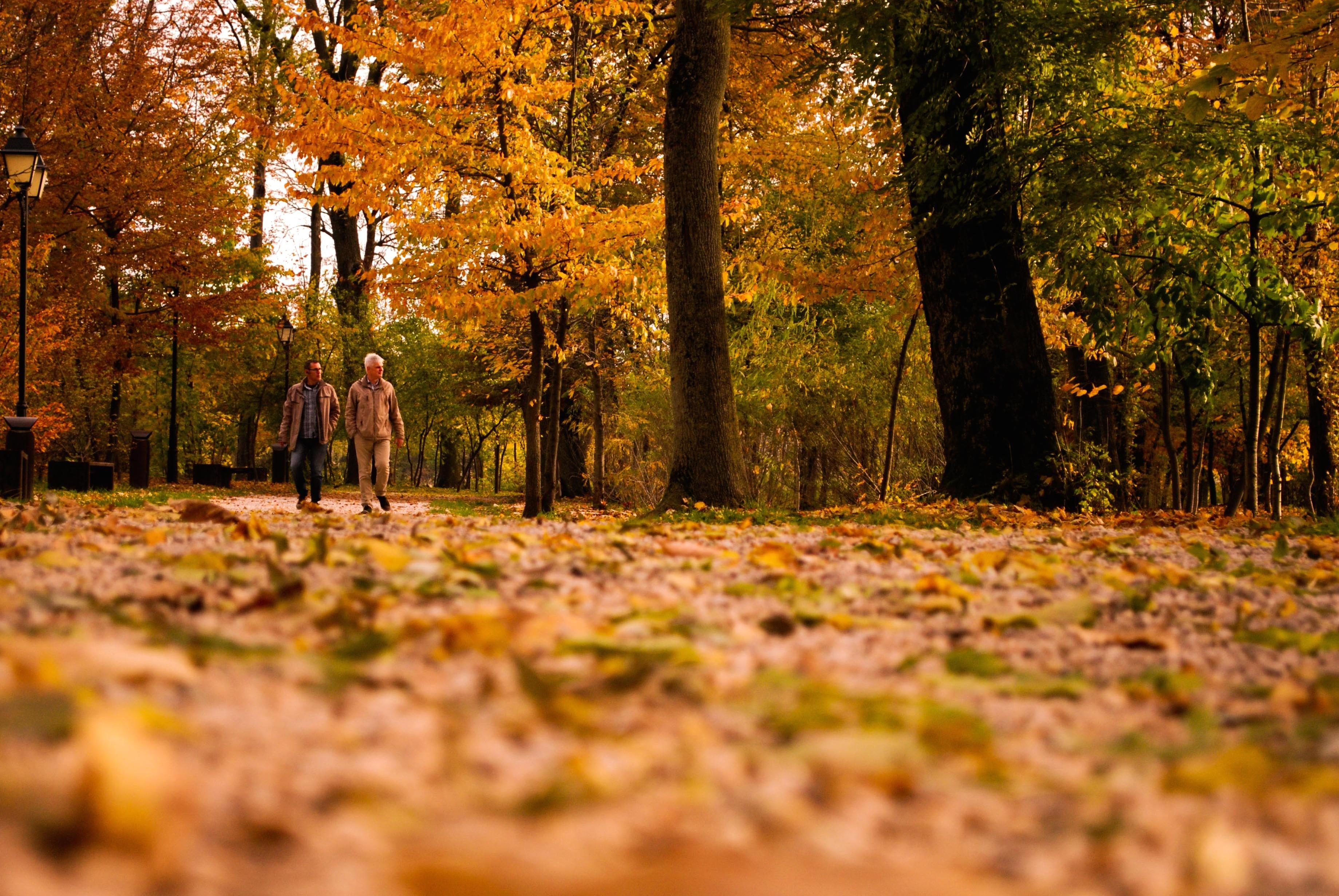 Fall Path Wallpaper Free Picture People Autumn Leaf Wood Tree Nature