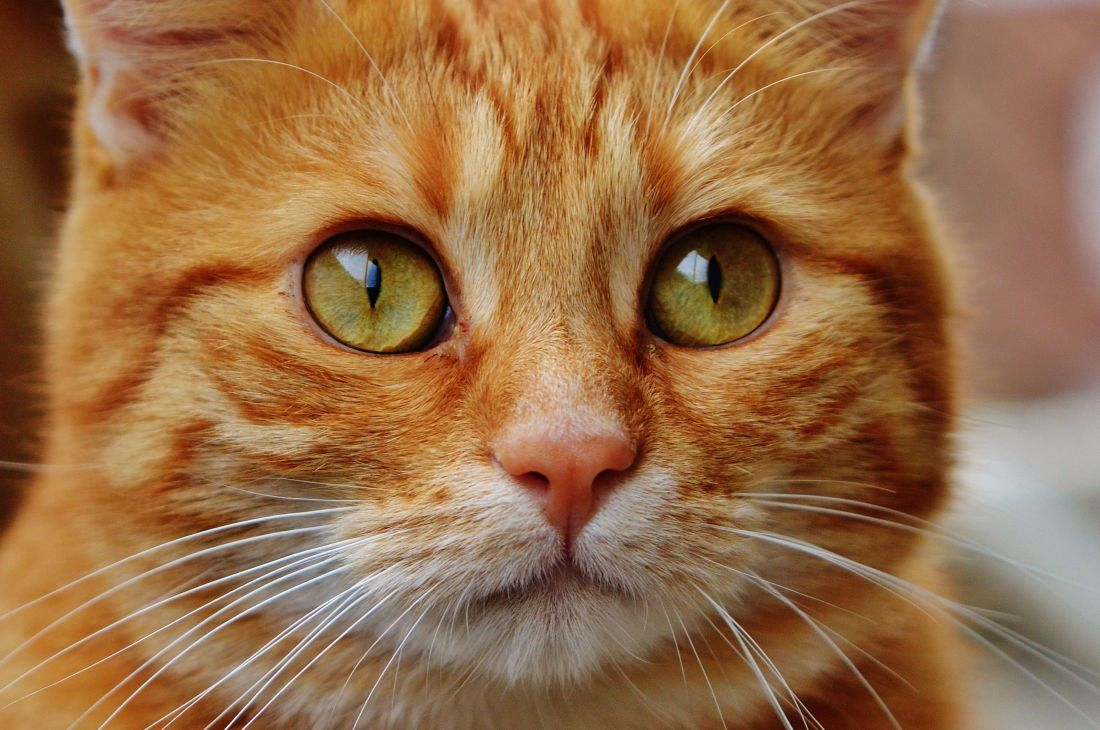 Wallpaper Hd Portrait Orientation Image Libre Mignonne Animal Animale T 234 Te Chat