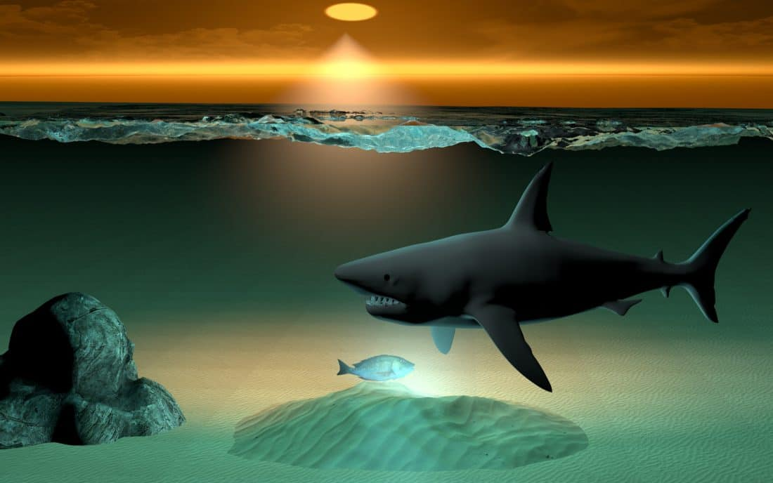 Urban Wall Free Picture: Animation, Ocean, Underwater, Sea, Shark