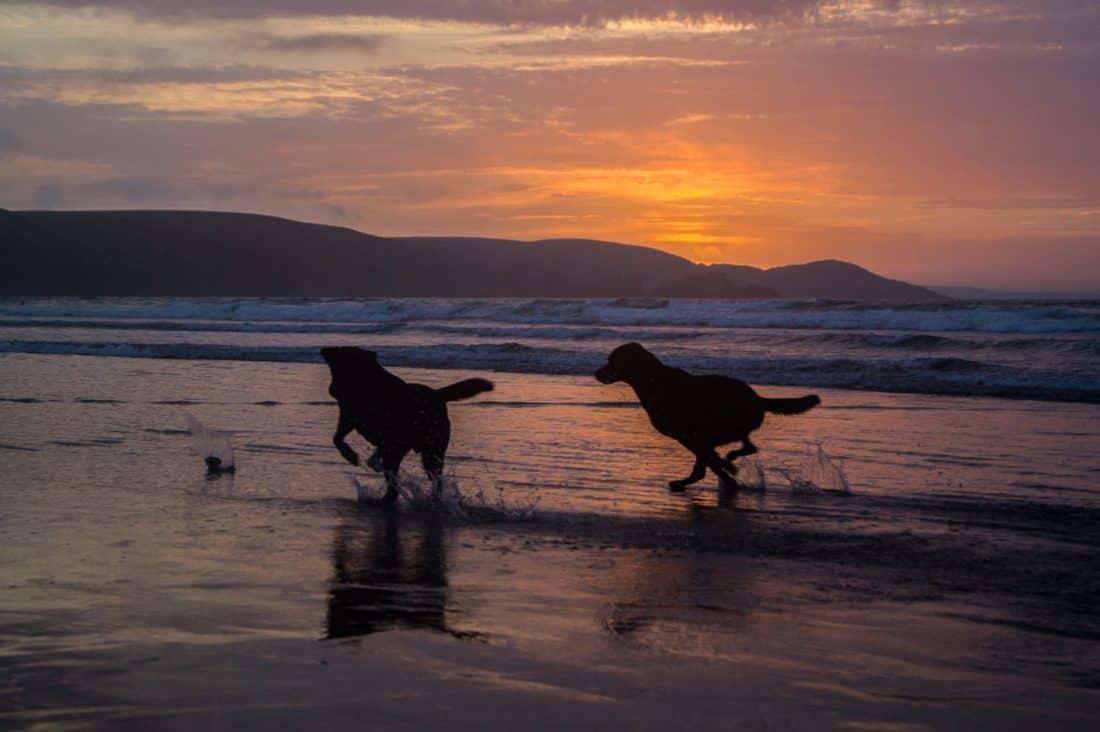 Free Winter Animal Wallpaper Free Picture Water Sunset Beach Ocean Dog Animal
