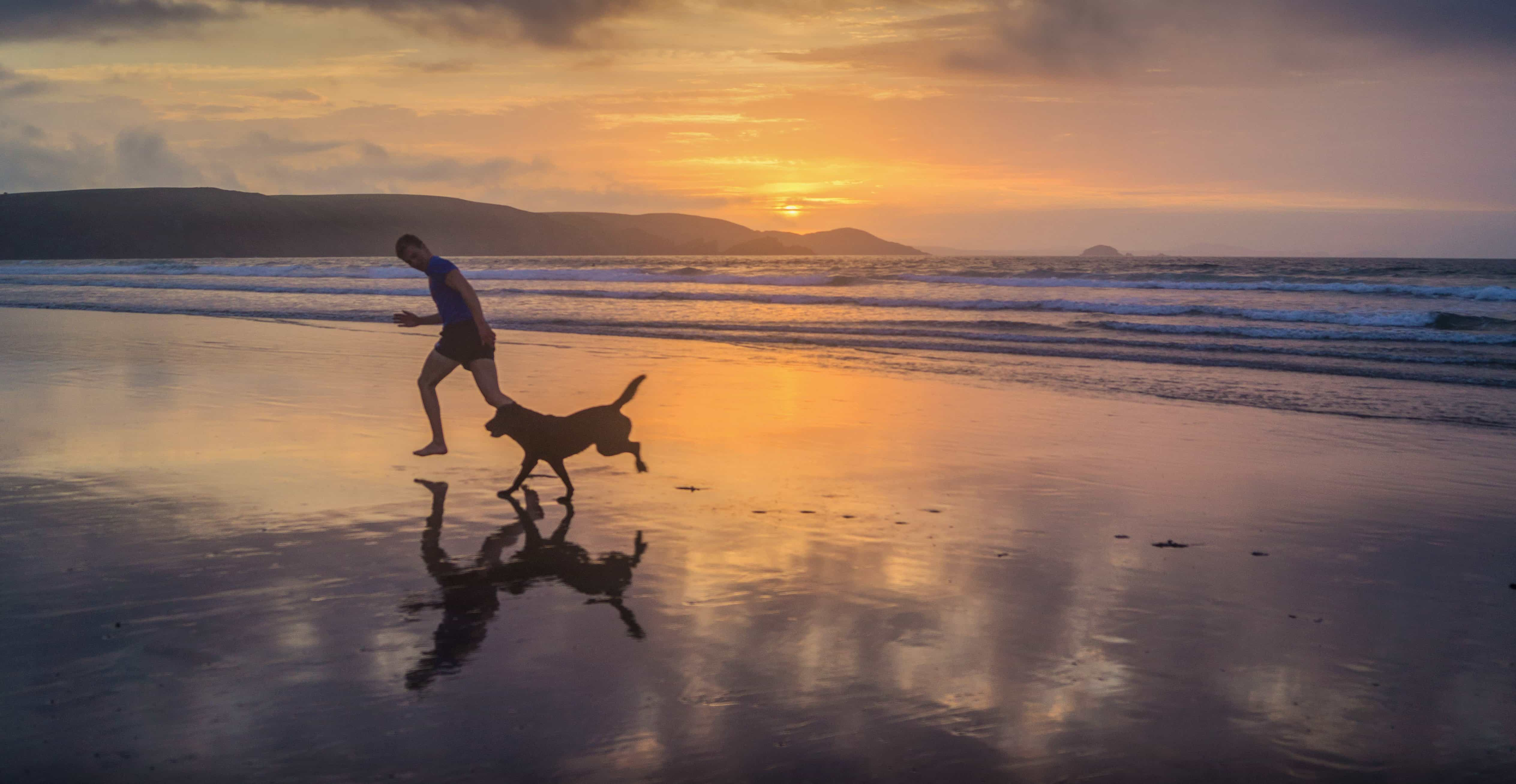 Black Wood Wallpaper Free Picture Water Sunlight Man Silhouette Dog