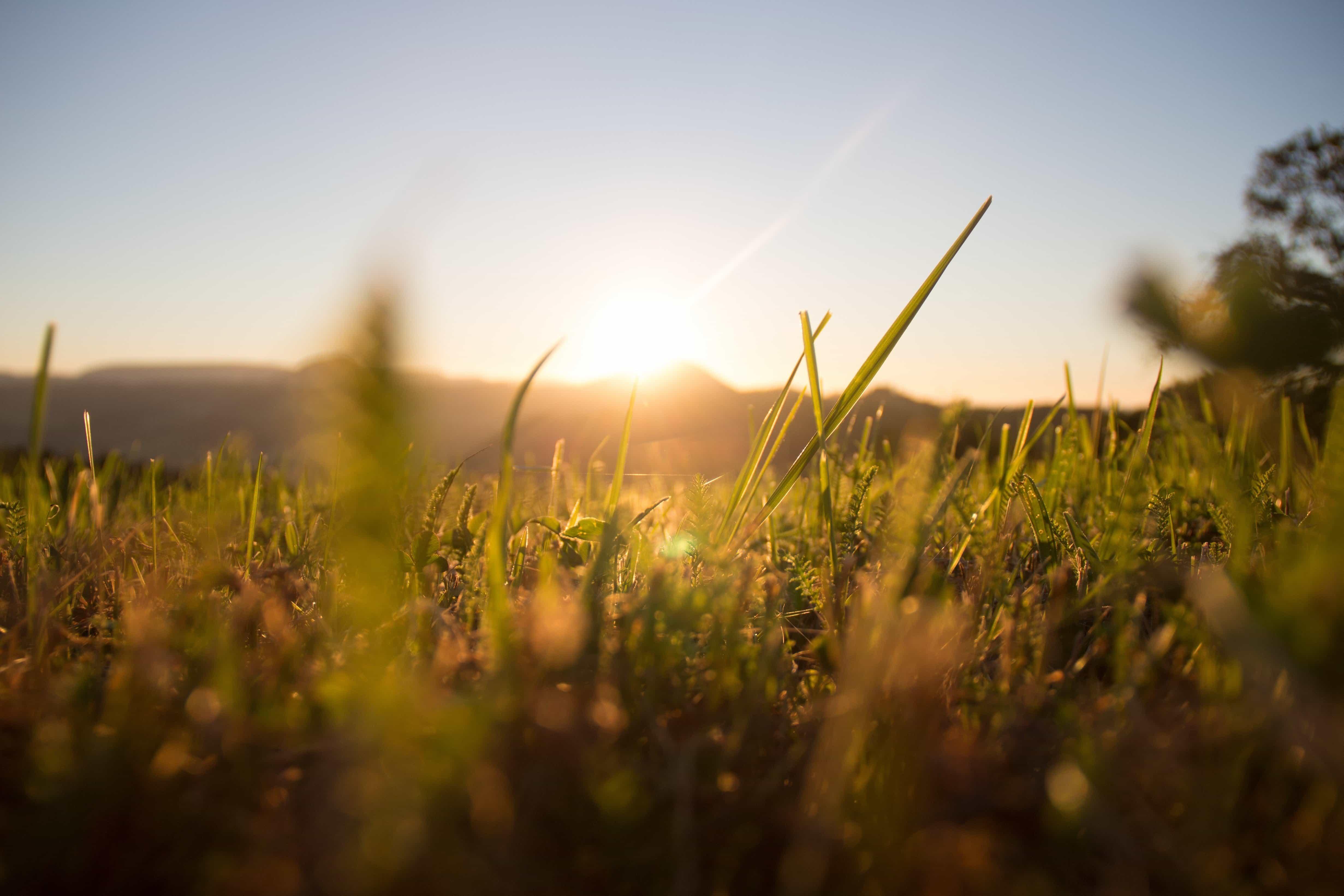 Michigan Fall Wallpaper Free Picture Field Grass Sunrise Herb Sun Nature