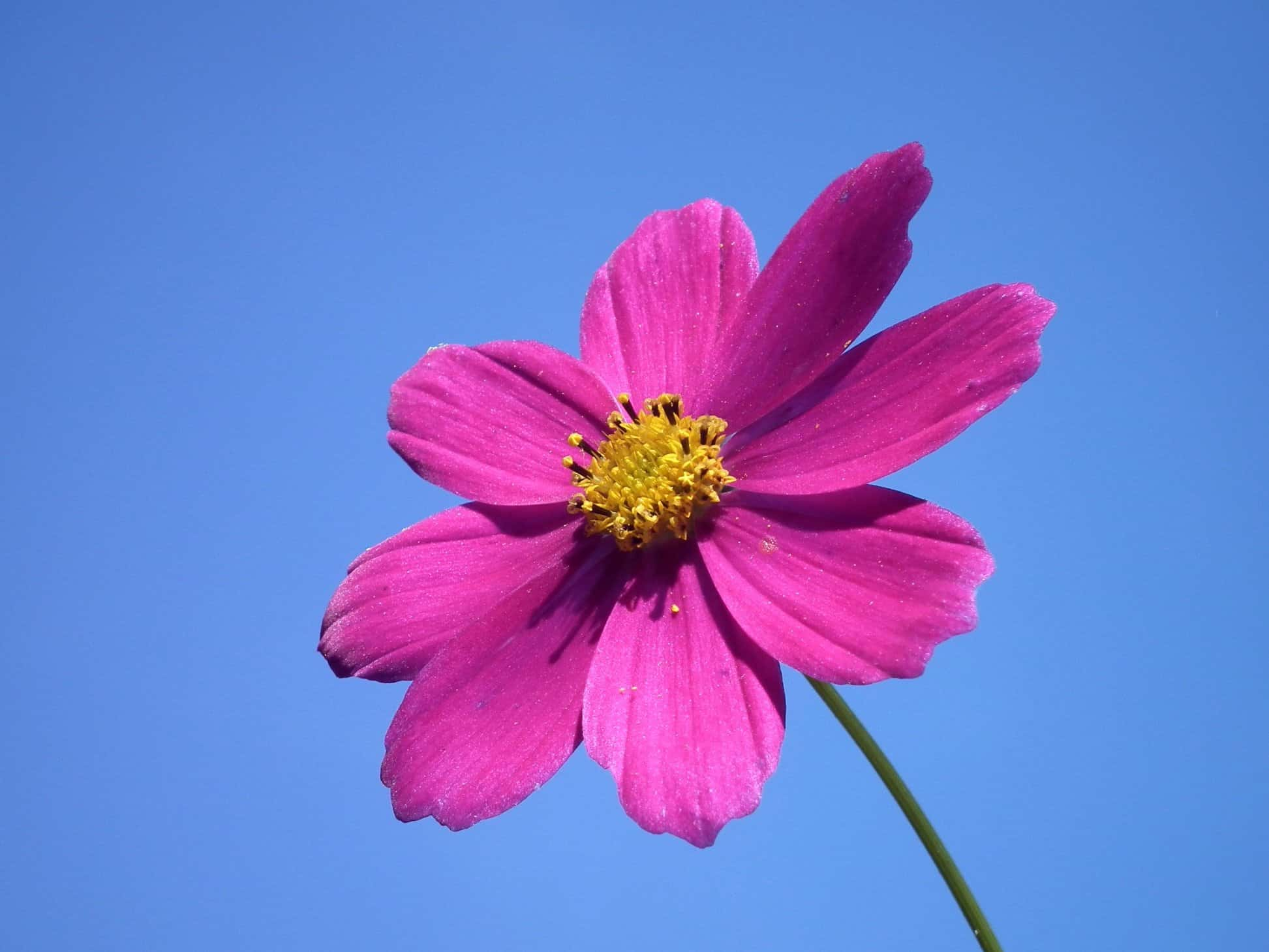 Free Beautiful Desktop Wallpapers For The Fall Free Picture Blue Sky Summer Flower Nature Petal