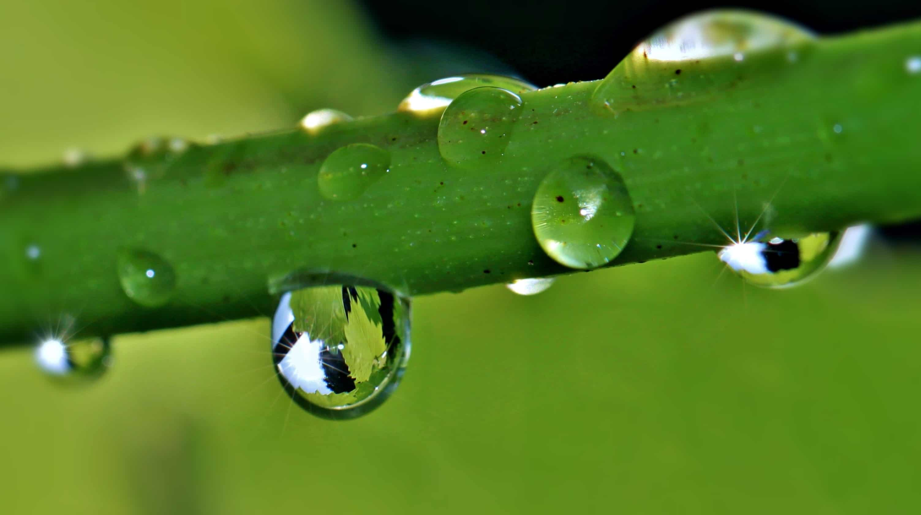 3d Wallpaper Water Drop Free Picture Flora Leaf Nature Rain Droplet Dew