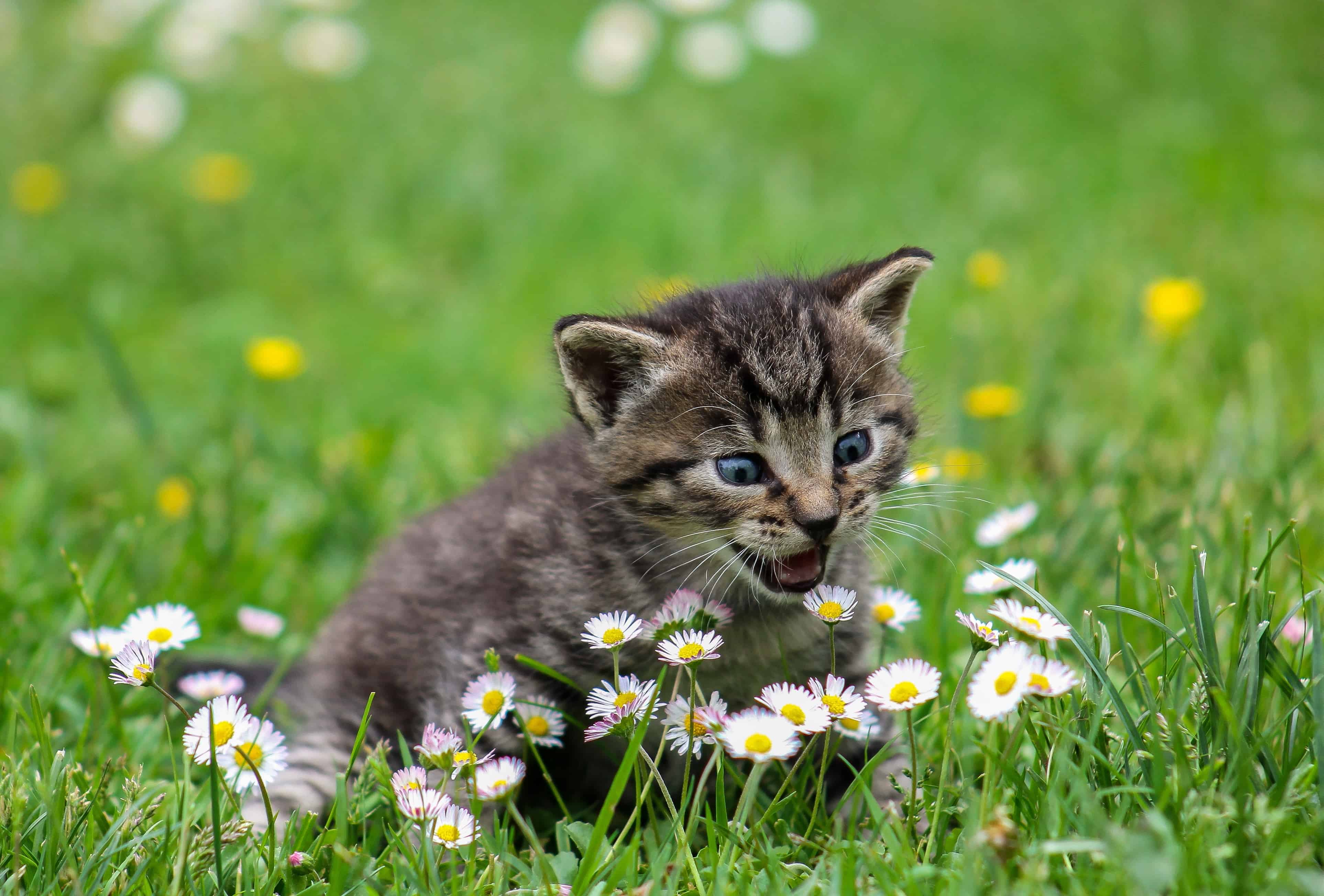 Cute Wallpapers Of Kittens And Puppies Free Picture Field Grass Cute Summer Nature Cat