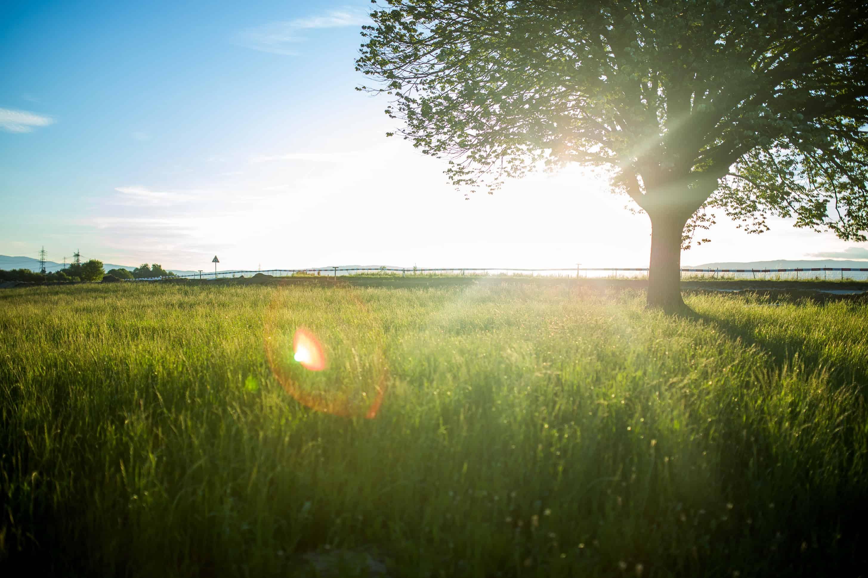 Summer Desktop Wallpaper Hd Free Picture Sunshine Summer Dawn Field Grass
