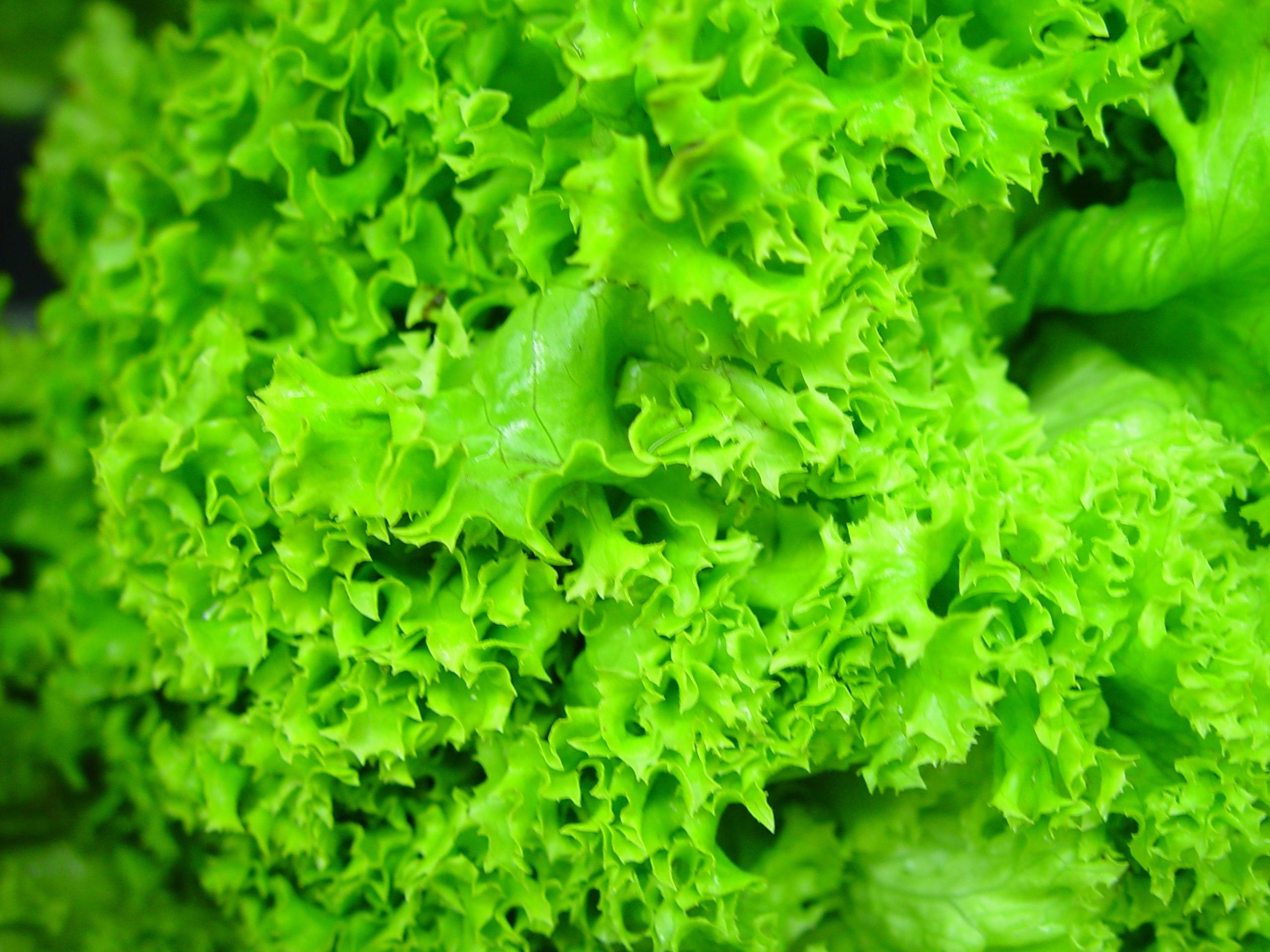 Hd Standard Wallpaper Free Picture Hydroponic Lettuce Leaves Green