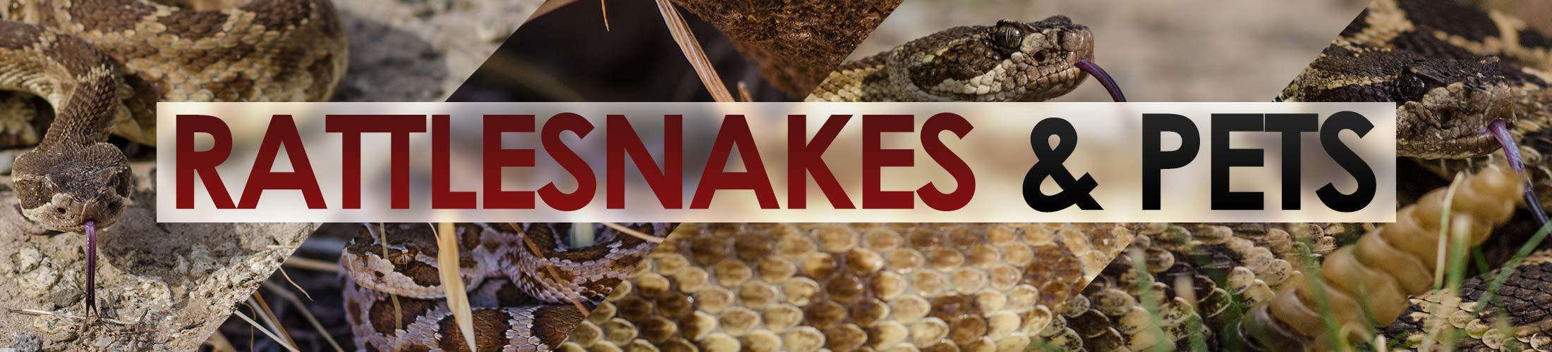 Rattlesnakes-&-Pets